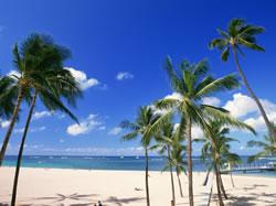 ハワイのスパでも採用されているライスフォース